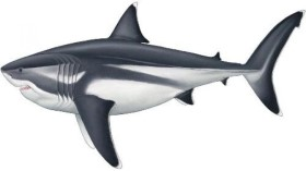 Các nhà khoa học tiết lộ kích thước khổng lồ của cá mập megalodon