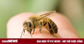 Bị ong đốt, bạn cần sơ cứu thế nào?