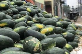 Lấy ngon làm nguyên tắc, người tiêu dùng Trung Quốc thích ăn trái cây Việt