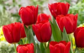 Những loài hoa ảnh hưởng xấu đến phong thủy không nên đem vào nhà