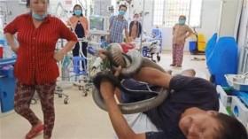 Cầm hổ mang chúa 4,5kg đi cấp cứu: Chôn nơi gặp nạn
