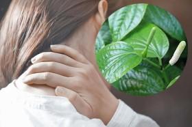 Mẹo chữa đau vai gáy bằng lá lốt – Giảm đau nhanh