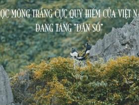 Voọc mông trắng cực quý hiếm của Việt Nam đang tăng dân số