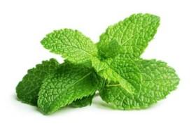 Ai bị viêm mũi, viêm xoang: Áp dụng ngay bài thuốc siêu dễ với loại lá quen thuộc, chẳng cần tốn viên thuốc nào