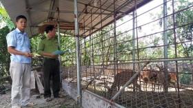 Kiểm soát gây nuôi động vật hoang dã trong đại dịch