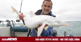 Bắt được con cá mập bạch tạng quý hiếm