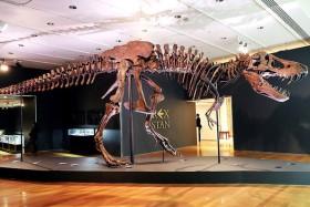 Chiêm ngưỡng một trong những bộ xương khủng long lớn nhất thế giới vừa được bán với mức giá trên trời