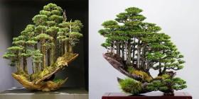 Mê hoặc khu vườn cây cảnh thu nhỏ ở Nhật Bản