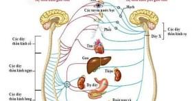 Rối loạn thần kinh thực vật