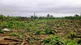 Quảng Nam: Làng rau Bàu Tròn xác xơ sau lũ