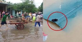 Hàng trăm con vật được cứu khỏi vùng ngập khiến nhiều người cảm động, dân mạng cấp bách lan truyền hình ảnh chú chó nằm trên nóc lũ chờ trợ giúp