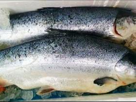 Đồng Nai: Công ty Mowi Việt Nam sản xuất cá hồi hết hạn gần một năm
